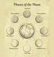 vintage astrology moon phases vector image vector image