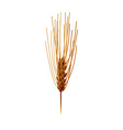 Wheat isolated vector image