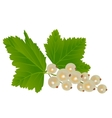 White currants vector image vector image