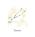 zodiacal constellation taurus on background of vector image vector image