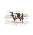 cow grazing in meadow milk beef logo or vector image vector image