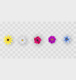 flowers on a transparent vector image vector image