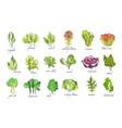 fresh herbs set arugula spinach sorrel chicory vector image vector image