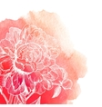 white ink drawn peony on red watercolor vector image vector image