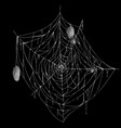 white spiderweb with spiders and cocoons vector image