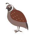 cute partridge bird cartoon flat sticker vector image vector image