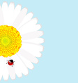 Ladybird on daisy flower over blue background vector image vector image