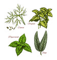 sketch icons of spice and herb dressings vector image vector image