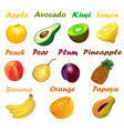 a set of fruits with names on a white background vector image