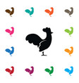 isolated cockerel icon hen element can be vector image