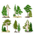realistic pine forest elements set vector image vector image