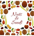 Nuts and seeds poster vector image vector image