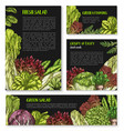 salads and leafy lettuce templates posters vector image vector image