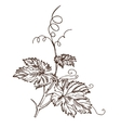 grape leaves in style a sketch vector image