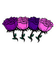 rose and purple roses on white background vector image vector image