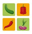 set vegetables fresh harvest healthy image vector image vector image