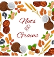 Nuts grain and seeds poster vector image vector image