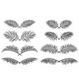 set borders with palm leaves vector image