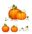 Fresh two pumpkin with sweet green leafs vector image
