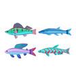 mackerel blue fish fauna set vector image