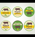 Badges pork organic product design template vector image