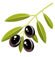 Black olives vector image vector image