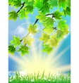 Eco background - green leaves grass bright sun vector image vector image