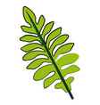 nature leave foliage botanical image isolated on vector image vector image