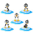 penguin cartoon set collection vector image vector image