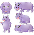 hippo cartoon set collection vector image vector image