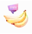 Banana hand drawn watercolor on a white vector image vector image