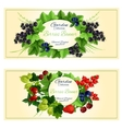 Fresh berries and fruits banners for food design vector image vector image