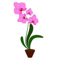 pink orchid flower on white background vector image