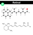 Retinal structure vector image