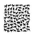 dog pet activity silhouettes vector image vector image