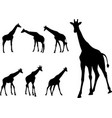 giraffes silhouettes collection vector image vector image