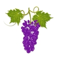 Hand-drawing grapes with leaves vector image