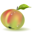ripe apple vector image vector image
