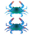 blue crab isoleted on white flat gradient sea vector image
