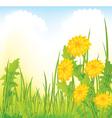 Dandelion meadow vector image