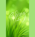 frash spring green grass background with vector image vector image
