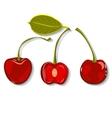 Hand-drawing juicy cherries vector image