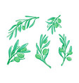 olive branches sketch style on white vector image vector image