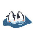 penguins on a piece of iceberg vector image