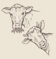 portrait of bulls vector image vector image