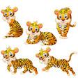 tiger cartoon set collection vector image vector image