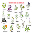 best herbal remedies for colic relief vector image vector image