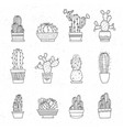 decorative potted cacti set of hand-drawn vector image