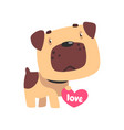 funny pug dog holding pink heart cute valentine vector image vector image