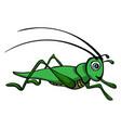 grasshopper on white background vector image vector image